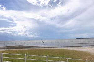 三番瀬海浜公園 海