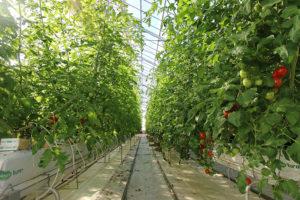 三須トマト農園