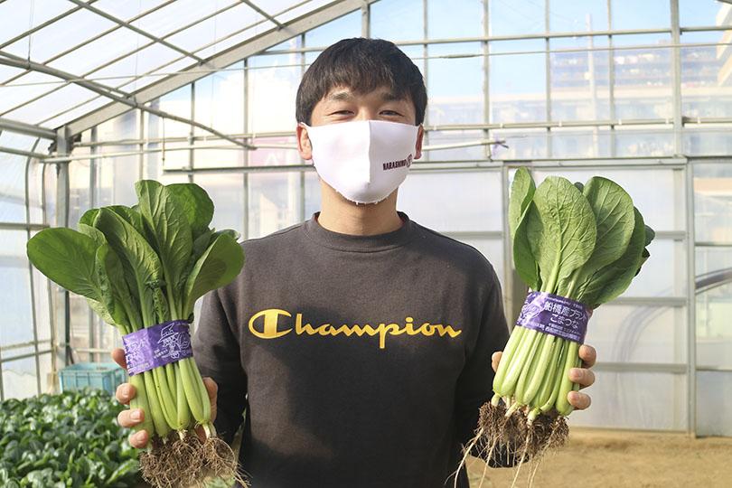 【ひらの農園】西船橋で作られる小松菜!船橋ブランドの小松菜ってどう作られているの?