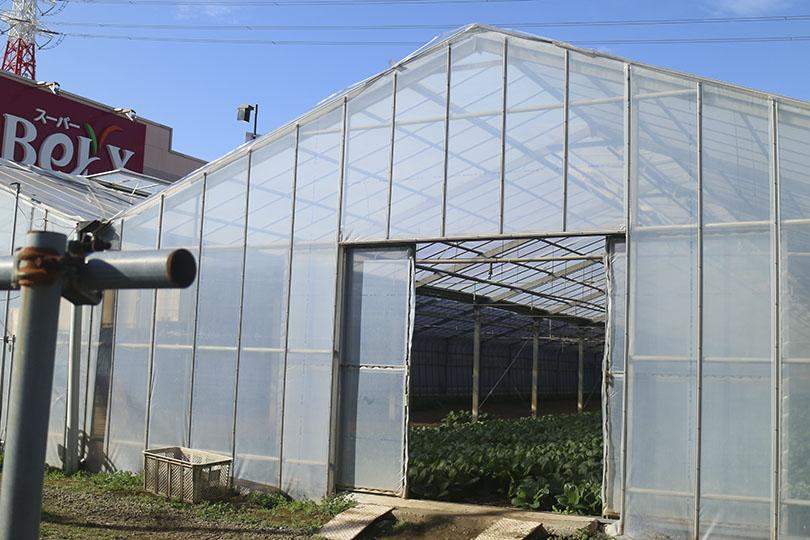 ひらの農園のビニールハウス