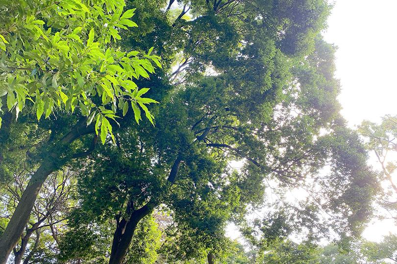 上山公園の木々