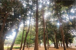 遊歩道脇の樹木の写真
